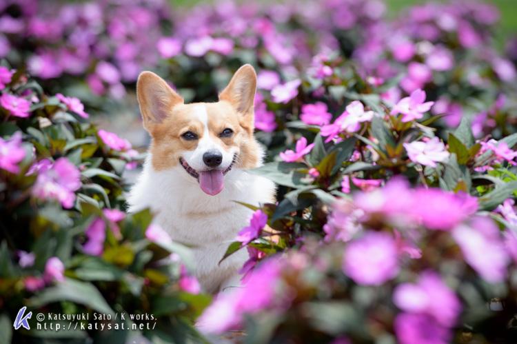 お花の中のSmileちゃん_d0102523_1564989.jpg