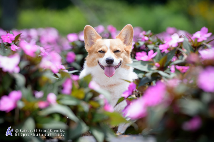 お花の中のSmileちゃん_d0102523_157290.jpg