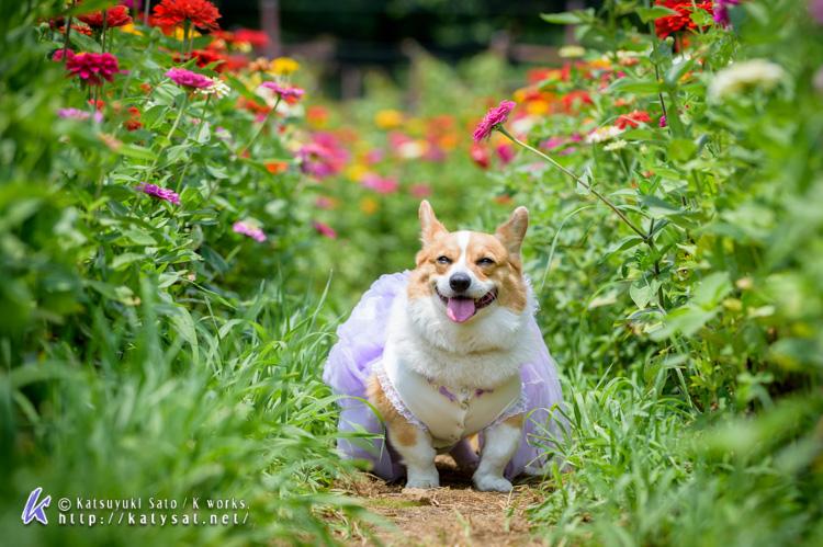 お花の中のSmileちゃん_d0102523_1573278.jpg