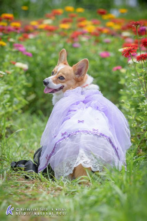 お花の中のSmileちゃん_d0102523_1574635.jpg