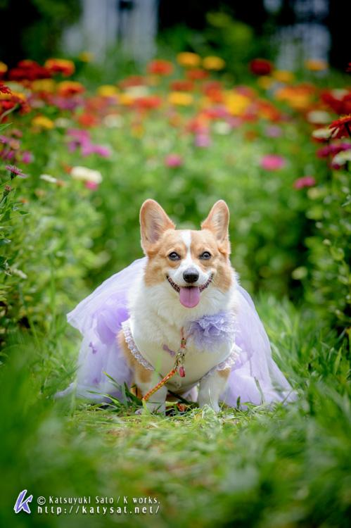 お花の中のSmileちゃん_d0102523_158744.jpg