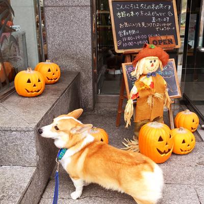 かぼちゃだらけ_f0035333_1845144.jpg