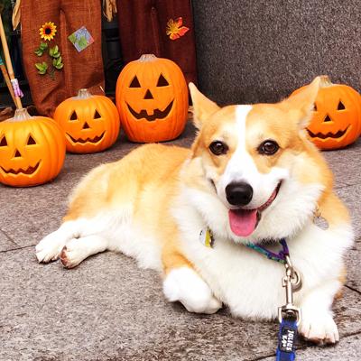 かぼちゃだらけ_f0035333_185227.jpg