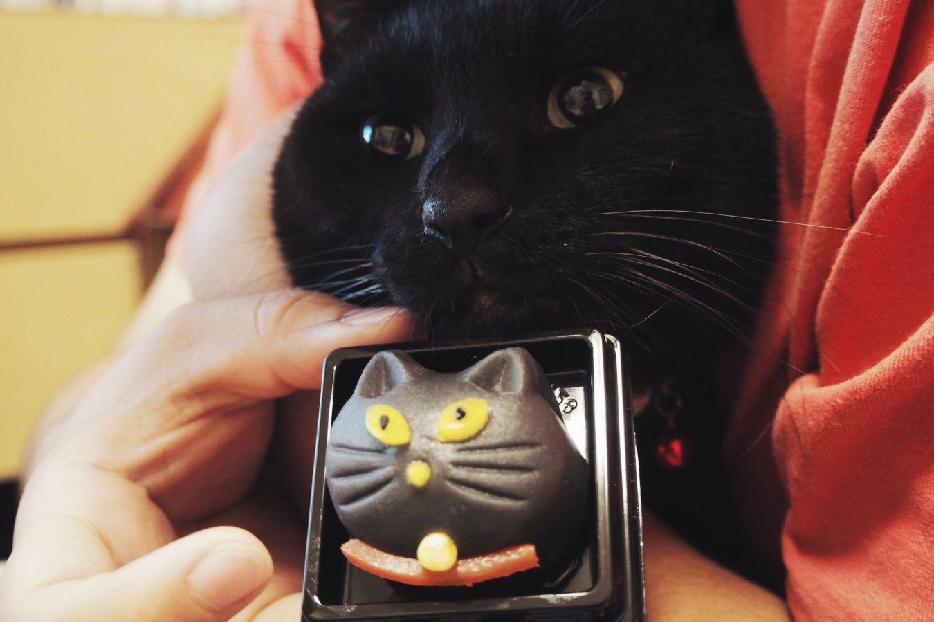 【Photo】ハロウィンは、黒猫_b0008655_19410483.jpg