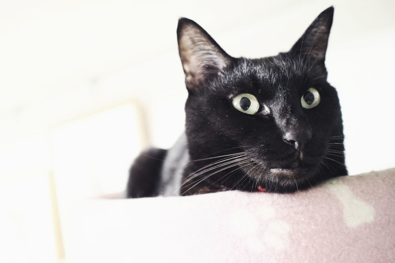 【Photo】ハロウィンは、黒猫_b0008655_19412099.jpg