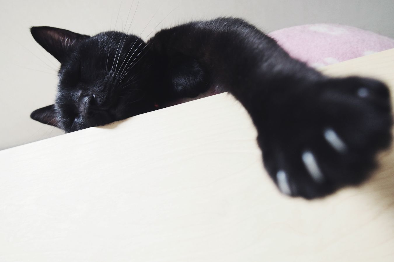 【Photo】ハロウィンは、黒猫_b0008655_19412779.jpg