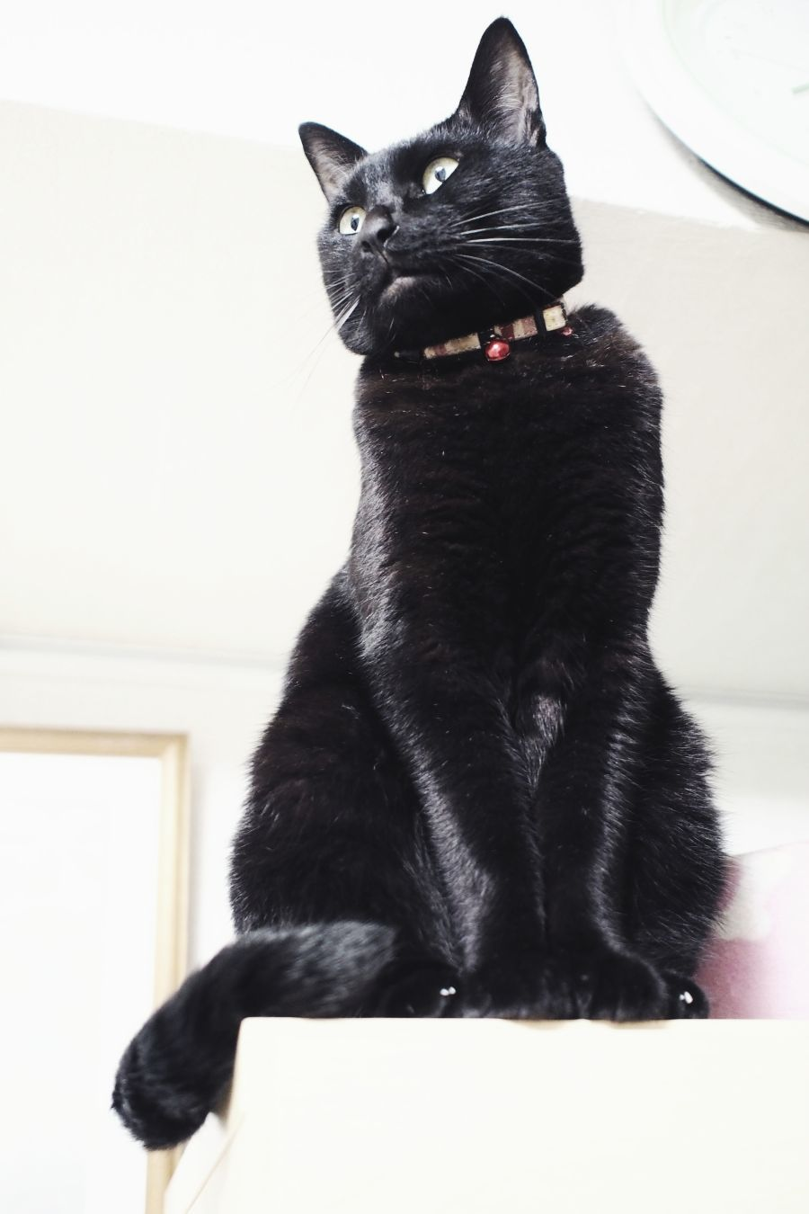 【Photo】ハロウィンは、黒猫_b0008655_19413588.jpg