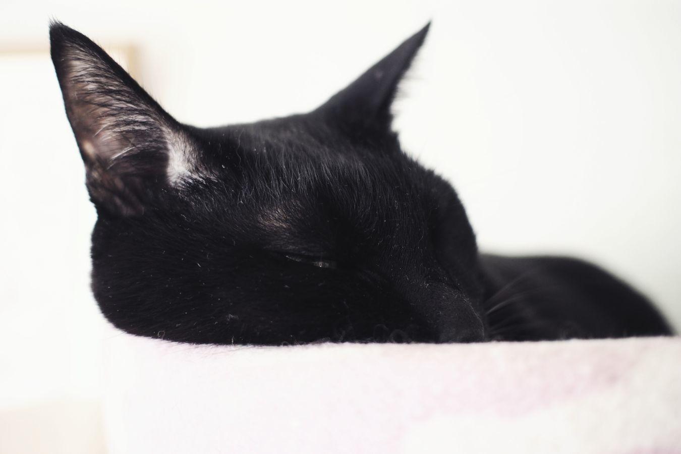 【Photo】ハロウィンは、黒猫_b0008655_19414023.jpg