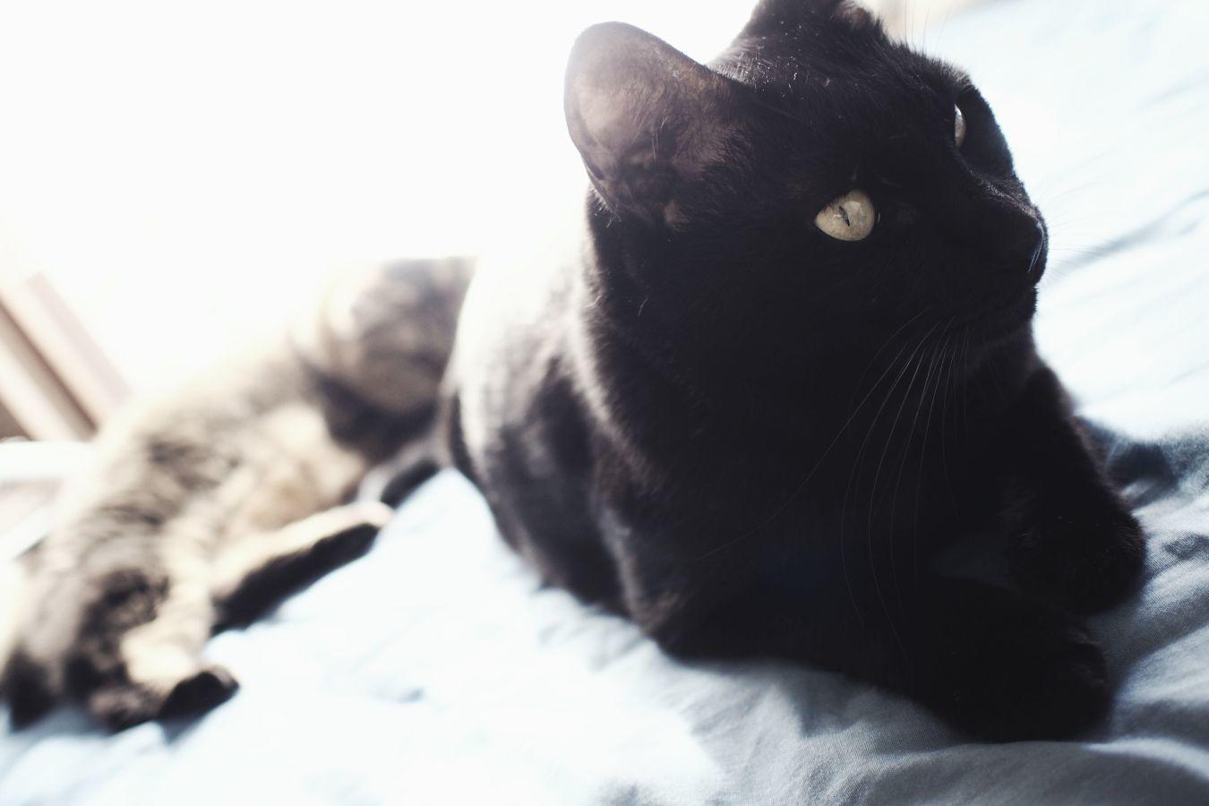 【Photo】ハロウィンは、黒猫_b0008655_19414751.jpg