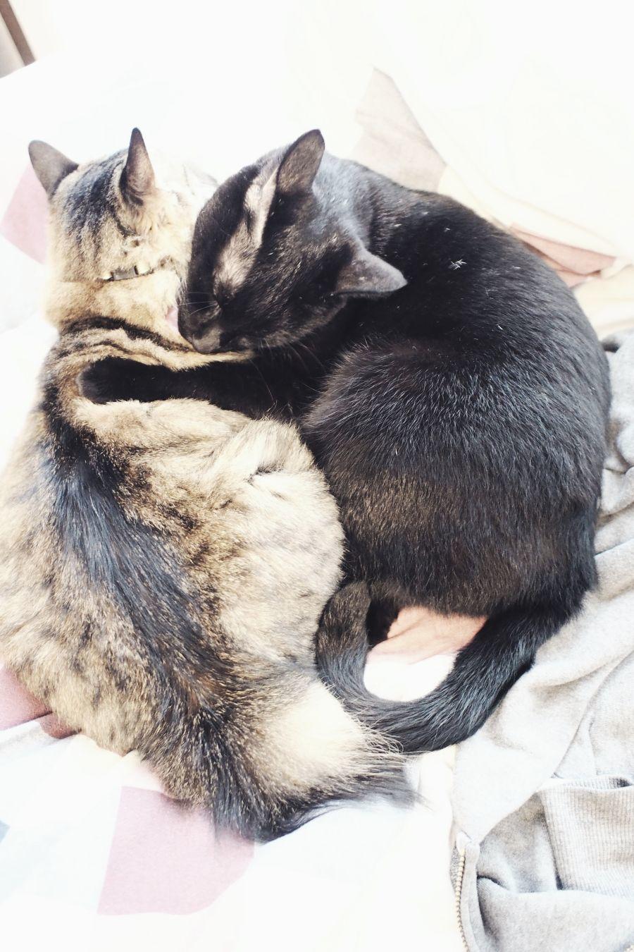 【Photo】ハロウィンは、黒猫_b0008655_19415156.jpg