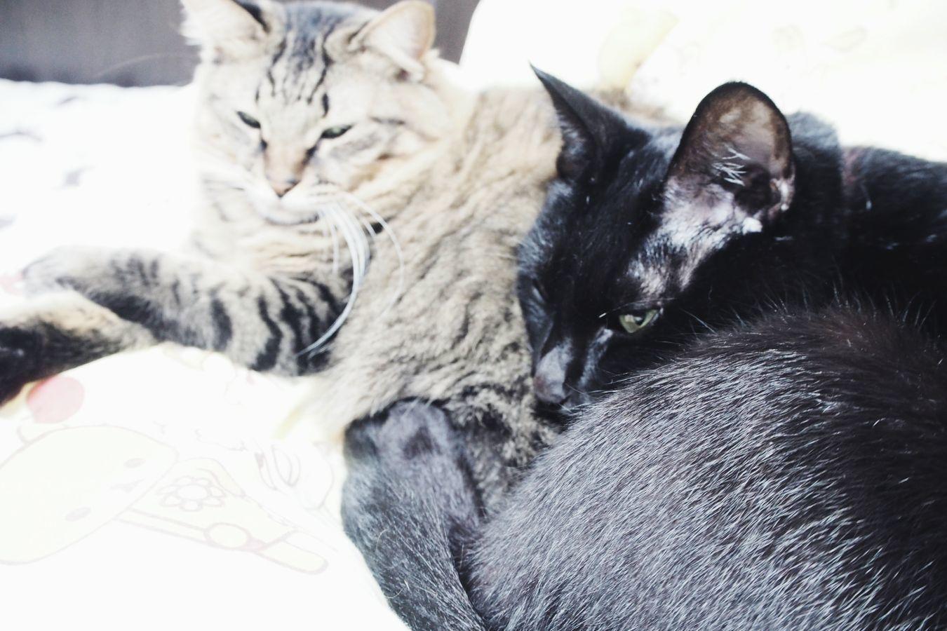 【Photo】ハロウィンは、黒猫_b0008655_19415719.jpg
