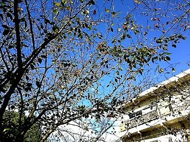 秋晴れの朝_c0055363_15372283.jpg