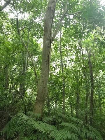 西表島 8 ジャングル編_f0202682_16235720.jpg