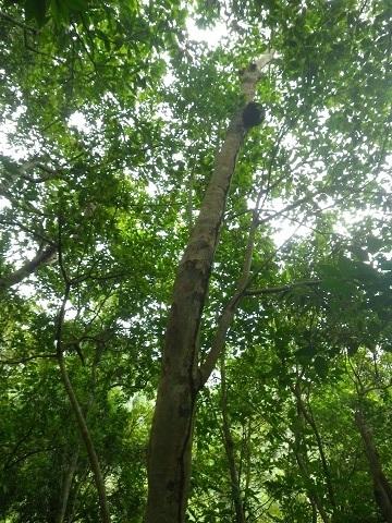 西表島 8 ジャングル編_f0202682_16240821.jpg