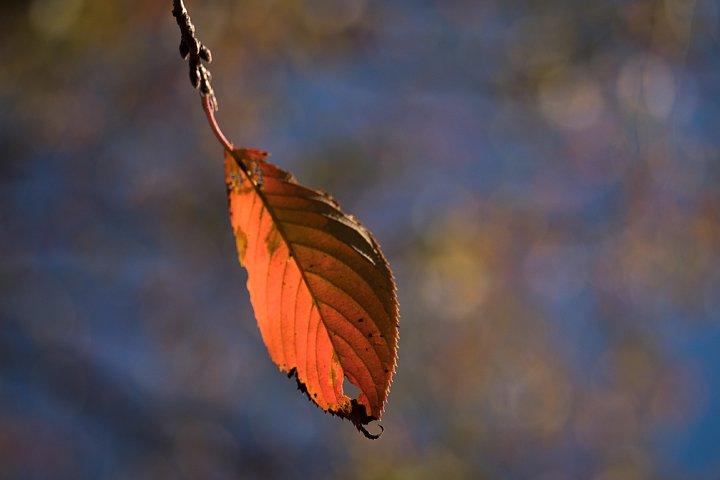 晩秋の準備に入った公園_d0353489_20111939.jpg