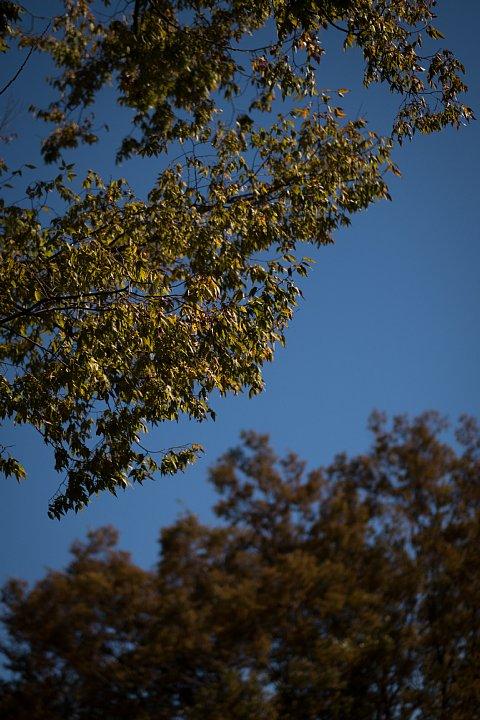 晩秋の準備に入った公園_d0353489_2012164.jpg