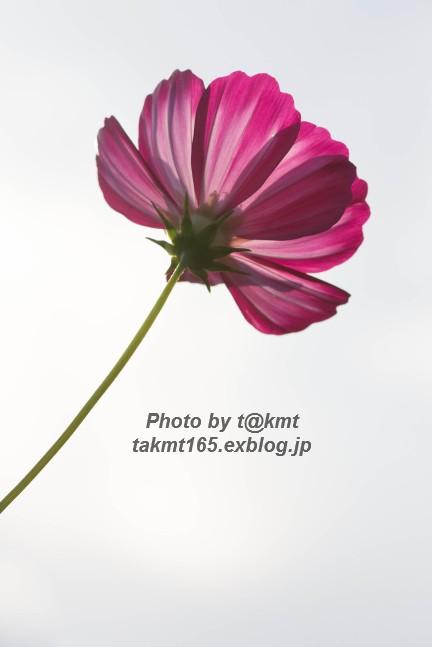 f0360002_1823342.jpg
