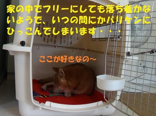 f0121712_15090474.jpg