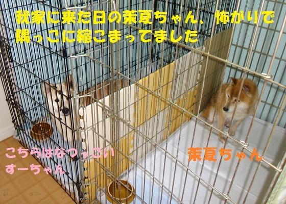 f0121712_15291530.jpg