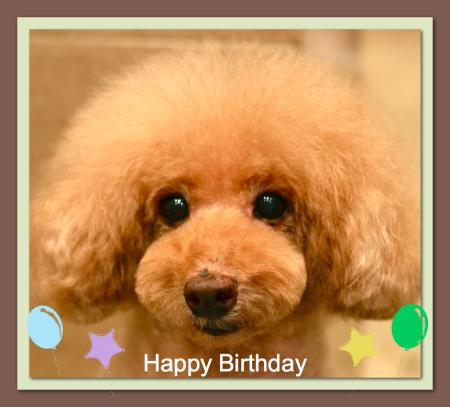 Happy Birthday♡リアンくん_d0060413_18561514.jpg