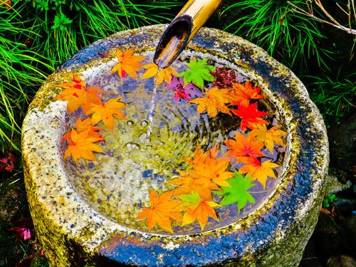 2016.10.29色づき始めた日本庭園の紅葉(昭和記念公園)_e0321032_1451359.jpg
