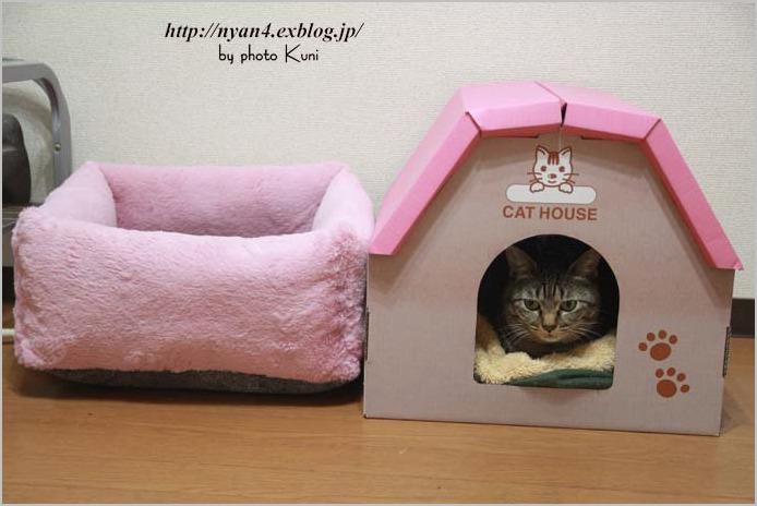 100均ショップの座布団で作る猫ベッド_f0166234_6312155.jpg