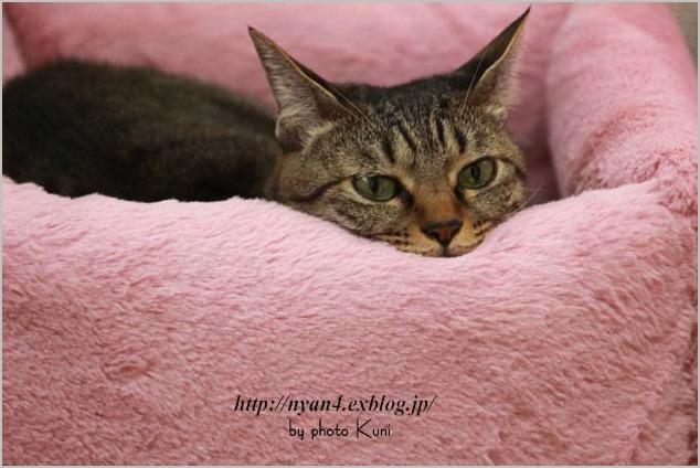 100均ショップの座布団で作る猫ベッド_f0166234_6324563.jpg