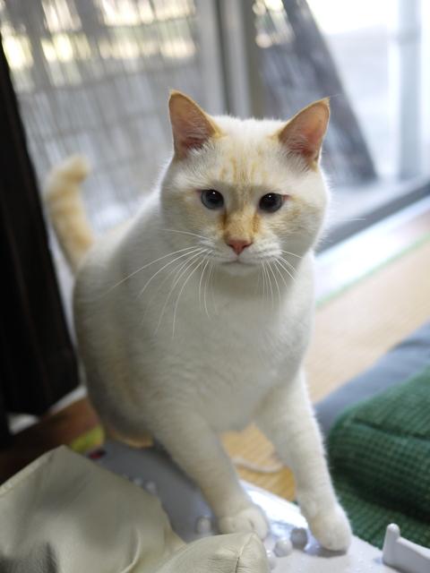 猫のお留守番 ミルクくん編。_a0143140_22381917.jpg