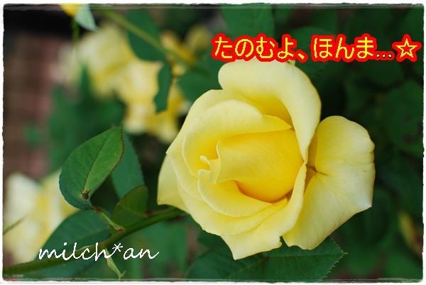 b0115642_19571342.jpg