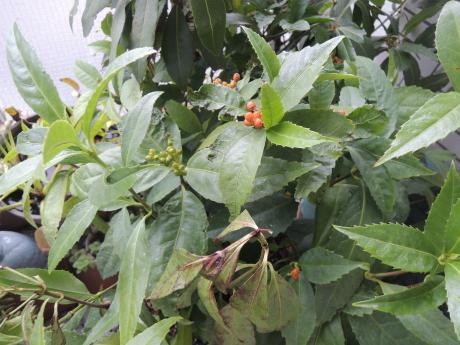 来春の庭仕事_c0341450_15543677.jpg
