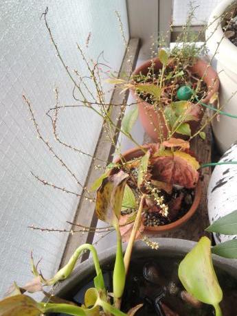 来春の庭仕事_c0341450_15544098.jpg