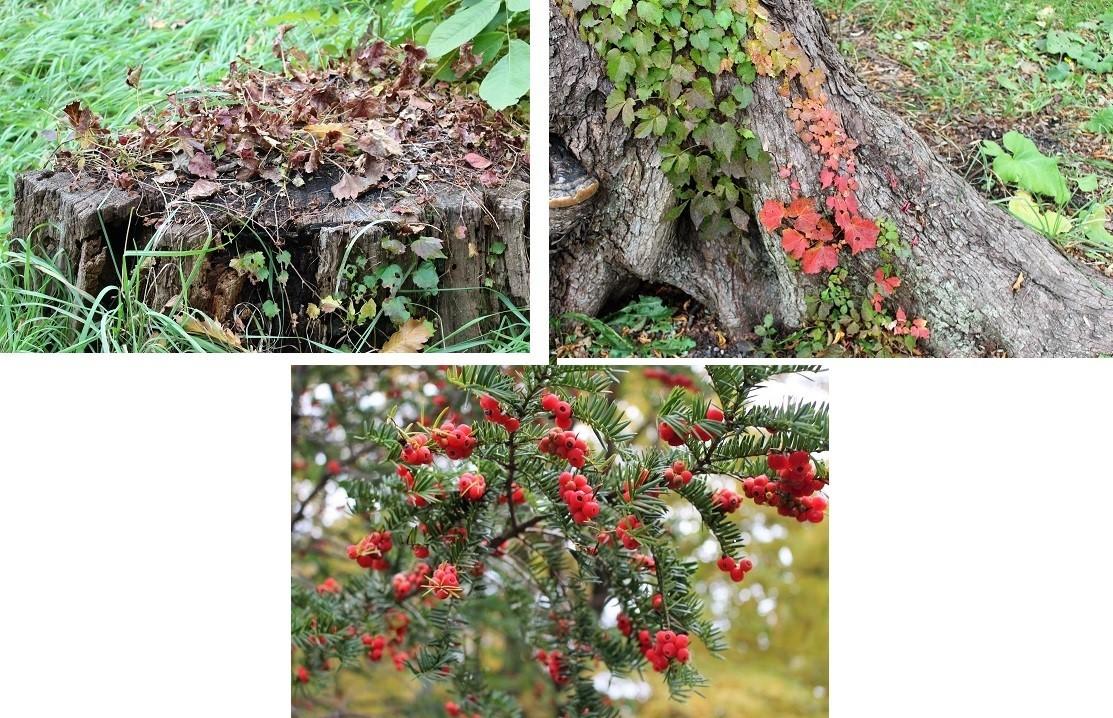 「円山公園の紅葉(黄葉)」 オーソッドクスに行ってきました。_f0362073_19145996.jpg