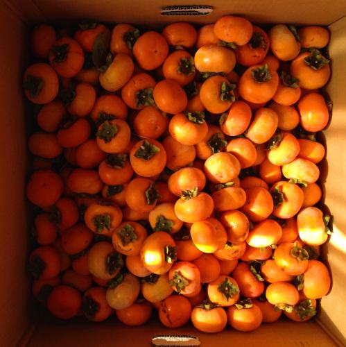 自宅の柿は豊作_e0054299_11053980.jpg