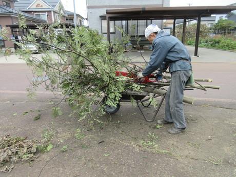 ネムの木を伐る・自生の花苗 ほか_a0203003_20124696.jpg