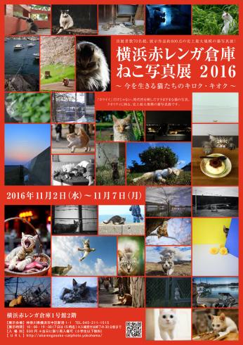 横浜赤レンガ倉庫 ねこ写真展 2016_e0090124_00020921.jpg