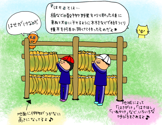 田んぼ体験★稲刈り&脱穀編なのだ_c0259934_13504058.png
