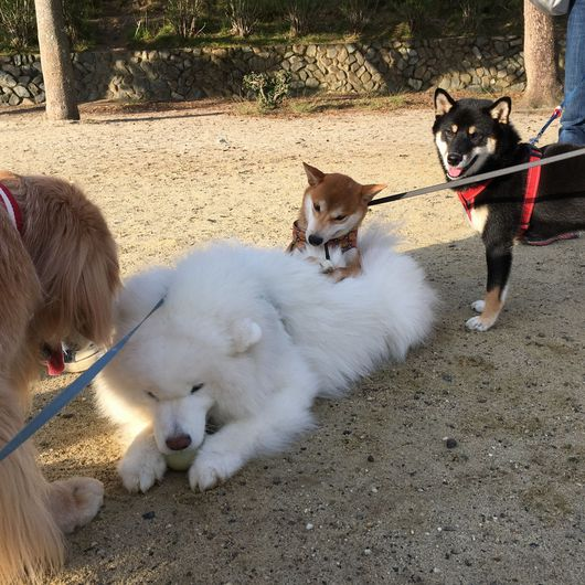お散歩犬の毎日_f0128542_0571699.jpg