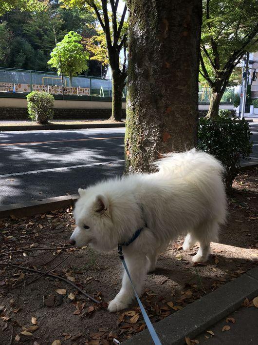 お散歩犬の毎日_f0128542_0595642.jpg