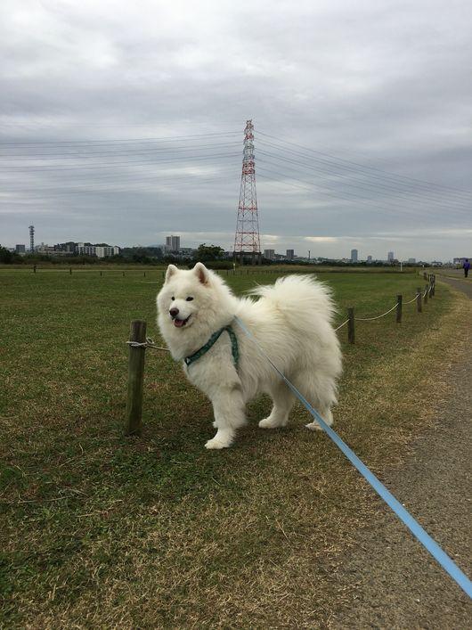 お散歩犬の毎日_f0128542_155451.jpg