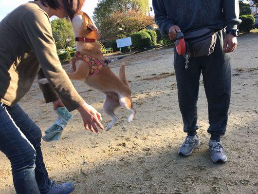 お散歩犬の毎日_f0128542_192480.jpg