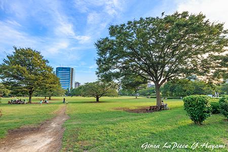風景の写真 木場公園の風景_b0133053_00575423.jpg