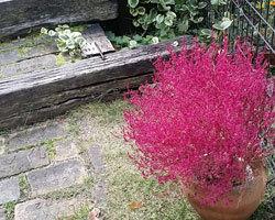 明日(月)、秋植えの苗販売します。_d0050155_07204764.jpg