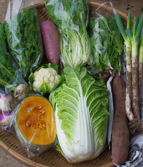今週の野菜セット(11/1~11/5着)_c0110869_13163450.jpg