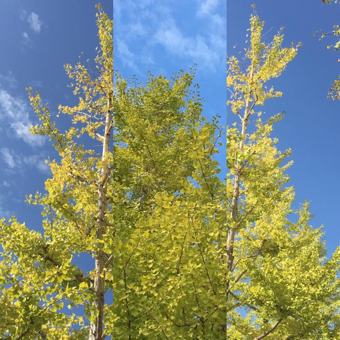 秋の喜び色々_c0116778_12193298.jpg