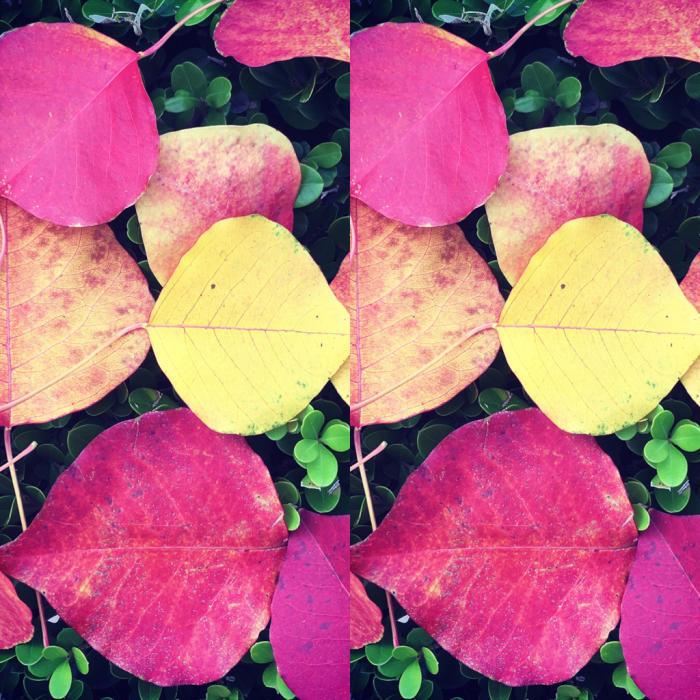 秋の喜び色々_c0116778_12193434.jpg