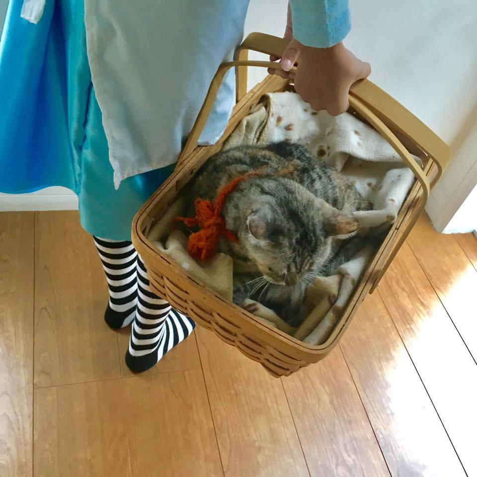 Alice with Cheshire Cat🐈_b0195783_13391846.jpg
