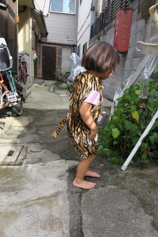 トラになりたい。_e0149587_05384181.jpg