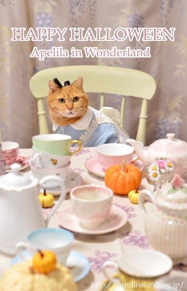 Happy Halloween!  Handmade Cat Costume- Alice in Wonderland_d0025294_22230614.jpg