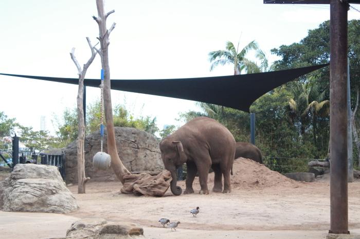 シドニー~タロンガ動物園_d0337698_20013583.jpg