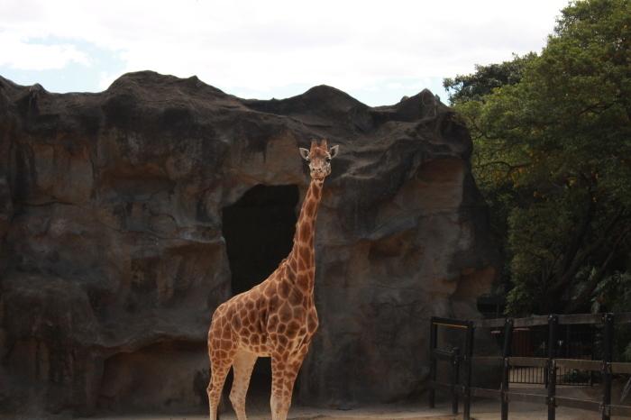 シドニー~タロンガ動物園_d0337698_20014429.jpg
